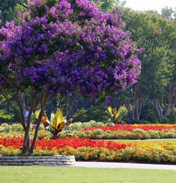 Dallas Arboretum Botanical Garden Dallas Parks Tx Official