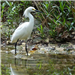 E89 - Snowy Egret at Joes Creek
