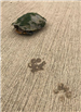 E93 - Turtle and Paw Prints