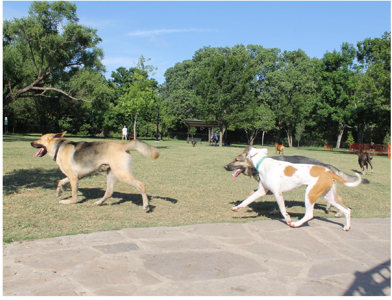 Off Leash Dog Park Dallas Tx
